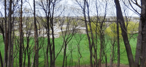 wooded grove brightened